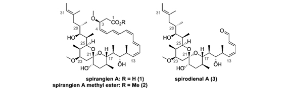 Accelerating Spirocyclic Polyketide Synthesis using Flow Chemistry