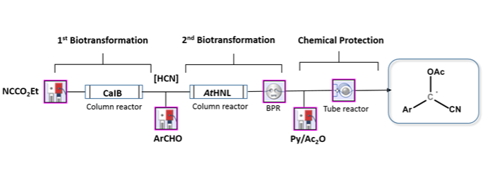 Multistep Continuous Preparation of Chiral O-Acetylcyanohydrins